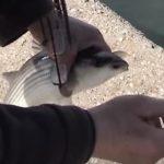 Ψάρεμα εγγλέζικο σε λιμάνι