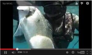 Υποβρύχιο Ψάρεμα: Λαβράκια