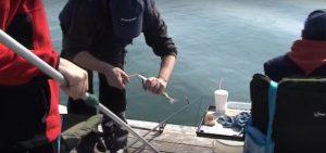 Ψάρεμα Σάλπας με Εγγλέζικο