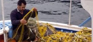 Ερασιτεχνική Αλιεία: Τέρμα οι άδειες – Ελεύθερο το ψάρεμα