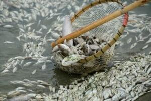 Χημικά στους ψαράδες