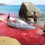 Φάλαινες-ζιφιοί εκβράστηκαν στη ΝΑ Κρήτη – Πιθανότατα θύματα…