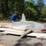 Καρχαρίας… ρεκόρ έγινε μπάρμπεκιου!