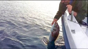 Ψάρεμα με ψιλό εργαλείο και ενα ωραίο ψάρι