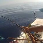 Tuna vs Antares