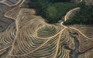 Οι επιπτώσεις στο μέγεθος των ψαριών από την αποψίλωση των δασών
