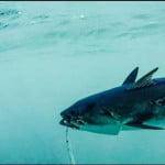 Sotos Fishing- Ψάρεμα με εργαλεία κάτω απο τα όρια