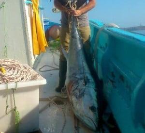 Σύρος: Η ψαριά του καλοκαιριού