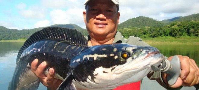 Frankenfish: Το ψάρι-τέρας που αναπνέει οξυγόνο και βγαίνει στην στεριά