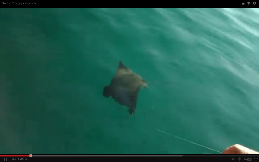 Ψάρεμα Σαλάχι με παραγάδι
