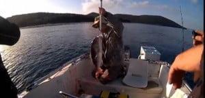 Ψάρεμα συρτής με μολύβι φύλακα DENDEX