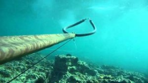 Υποβρύχιο ψάρεμα λαβράκι