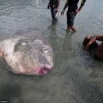 Πήγε για ψάρεμα και έπιασε ένα θαλάσσιο τέρας βάρους 1,5 τόνου και μήκους