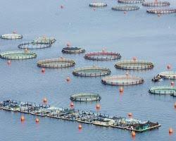 Ενίσχυση επενδύσεων στον τομέα της υδατοκαλλιέργειας