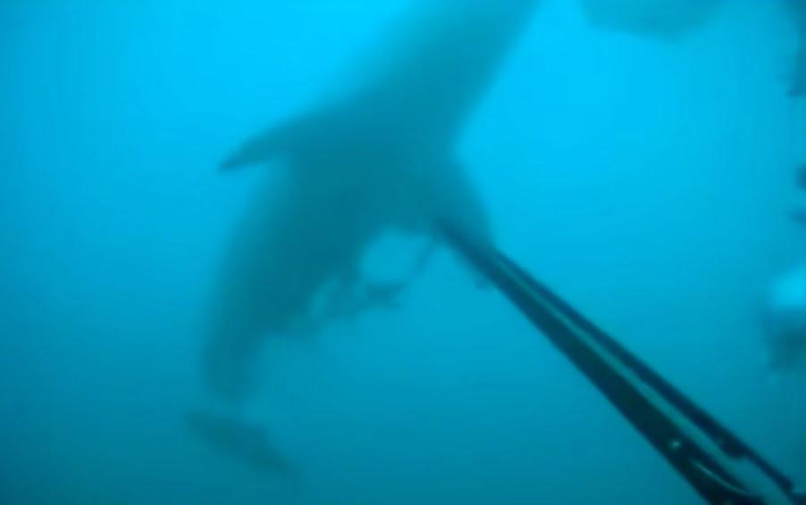 Φοβερό βίντεο! Αντιμετωπίζει τον καρχαρία με το ψαροντούφεκο