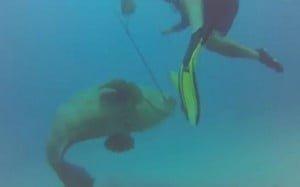 Τεράστιο ψάρι έκλεψε το ψαροντούφεκο από τον ψαροντουφεκά!