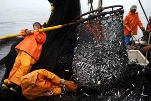 Μια «ληστεία» που σκοτώνει τις ελληνικές θάλασσες