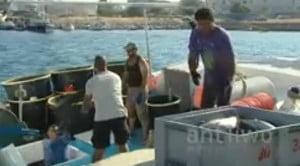 Σε απόγνωση ψαράδες εξαιτίας δελφινιών