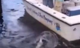 Ψάρευε αμέριμνος μέχρι που ένας αλιγάτορας του «έκλεψε»…την ψαριά