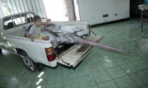 Έλληνας ψαράς έπιασε ξιφία 360 κιλών