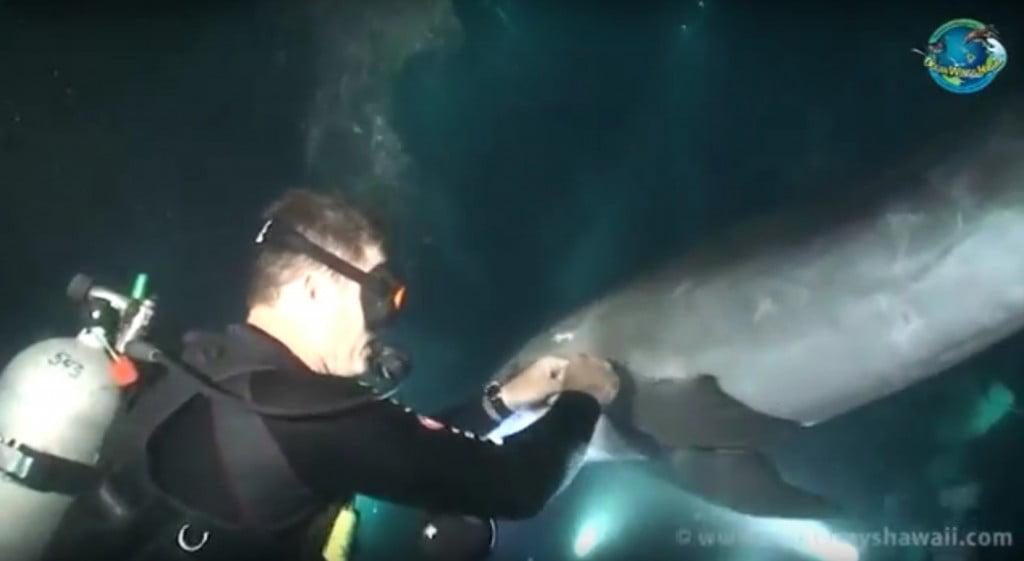 Τραυματισμένο δελφίνι, ζητάει βοήθεια από δύτη