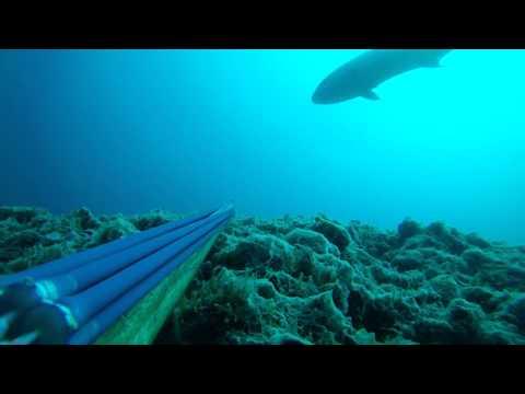 ψαροντουφεκο μαγιατικο 40κ (ξεψαρισμα)