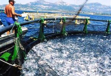 Παράταση για επενδύσεις Αλιείας έως τέλη του 2015