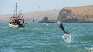 Η WWF κατά της υπεραλίευσης των θαλασσών