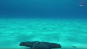 Καρχαρίας… με κάμερα Goprο