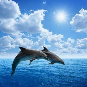 Τι γνώμη έχετε για τα δελφίνια;