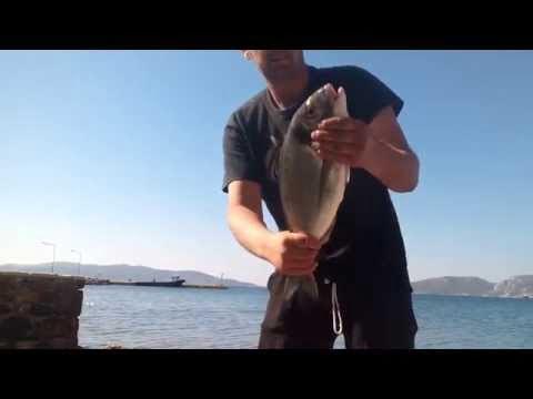 Ψάρεμα τσιπούρας 1,482 kg με τεχνική surfcasting.