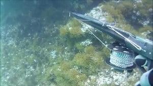 Καρτέρι-Ψαροντούφεκο στα ρηχά! / Shallow water spearfishing 0,50μ εώς 3,00μ(Νο2)