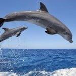 Όταν πας για ψάρεμα πόσα θαλάσσια θηλαστικά εντοπίζεις;