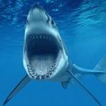"""""""Έβγαλαν"""" καρχαρία στο… Μαρούσι"""