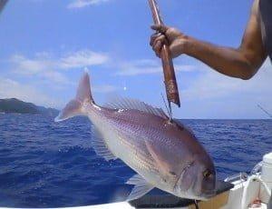 Ψάρεμα! Φαγκριά σκαθάρια