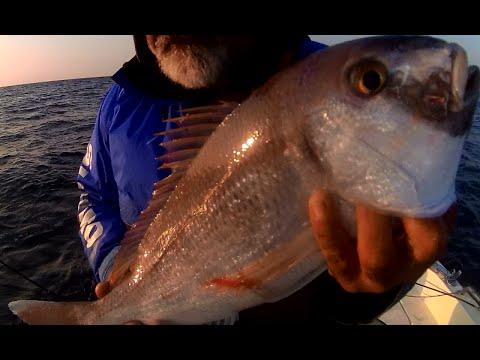 Ψάρεμα, engetsu και tenya με νωπό