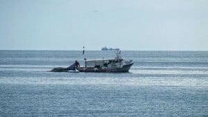 Επανέρχεται η άδεια ερασιτεχνικής αλιείας