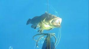 Η στιγμή που ψαροντουφεκάς πιάνει ροφό… 20 κιλών!