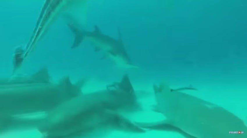 Λευκός καρχαρίας πιάστηκε στην Σύρο!