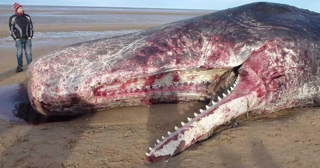 Γκρι φάλαινα, πεθαίνοντας μας άφησε ένα μήνυμα