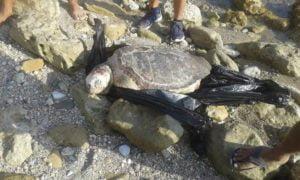 Οργή κατά ψαράδων για τη νεκρή «καρέτα – καρέτα» στην Πάφο