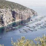 ΤΑ ΨΑΡΙΑ ΜΠΟΡΟΥΝ ΝΑ δώσουν ώθηση στην ελληνική οικονομία