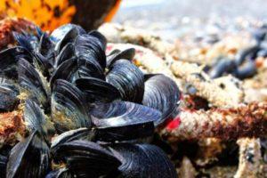 Απαγόρευση αλιείας Ζώντων Δίθυρων Μαλακίων στην Μάκρη