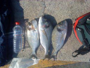 Το ψάρεμα της τσιπούρας