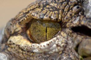 Αυστραλία: Οικογένεια κολυμπούσε με κροκόδειλο χωρίς να το γνωρίζει