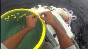 Ψαράδες έριξαν παραγάδι σε βάθος 300 μέτρων- Όταν το ανέβασαν έπαθαν ΣΟΚ