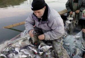 Βιστωνίδα: Ακριβά ψάρια για τον ψαρά, φθηνά για τον καταναλωτή