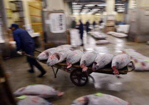 2048: H χρονιά που δεν θα υπάρχουν άλλα ψάρια για να τραφούμε