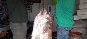 Απίστευτη ψαριά στις Κυκλάδες: Επιασαν «βλάχο» 42 κιλών με… παραγάδι