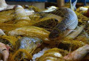 Τα ψάρια της Μεσογείου απειλούνται από την υπεραλίευση